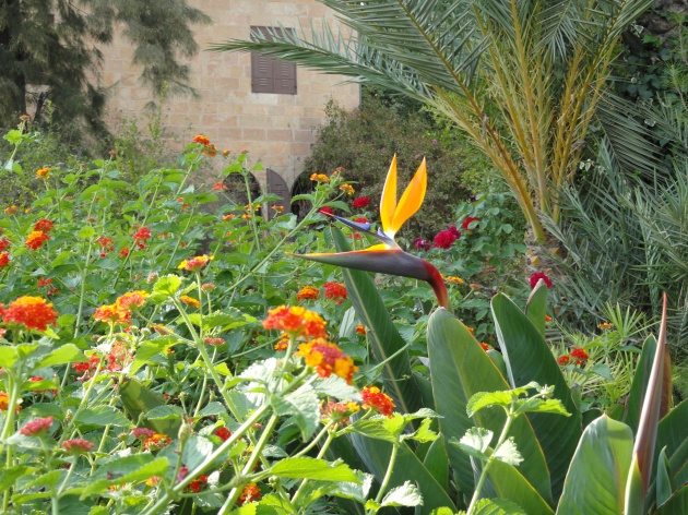 bird of paradise image, garden of Christian Embassy in Jerusalem