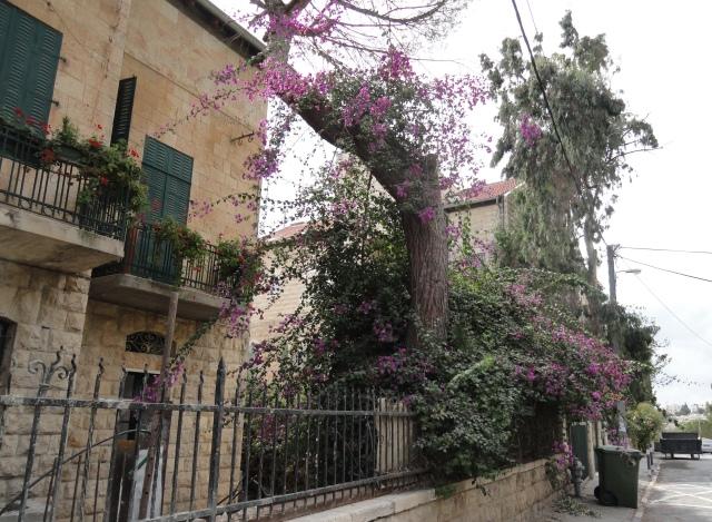 flowers image  , Jerusalem
