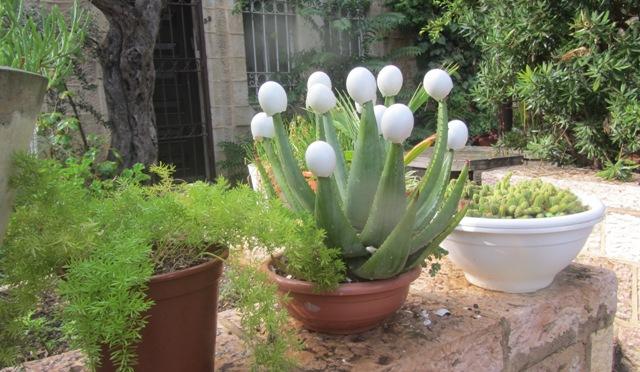 flowers , Yemin Moshe, Jerusalem photography tour