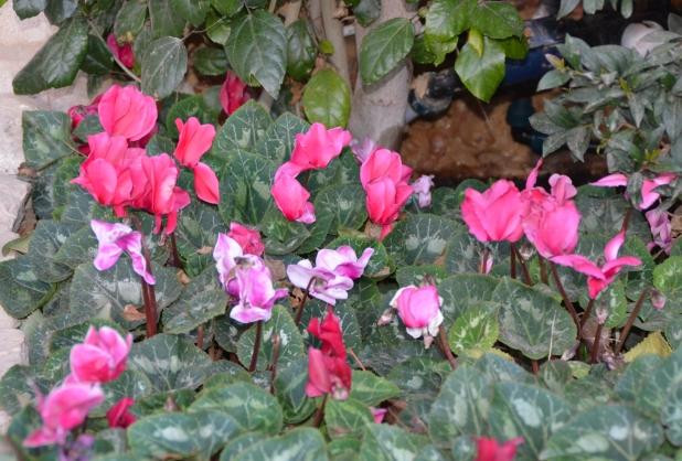 Flower photo Jerusalem
