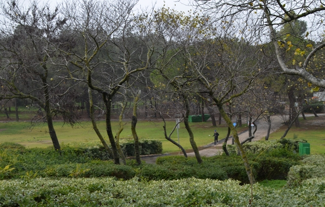 GAsn Sacher, SAcher park