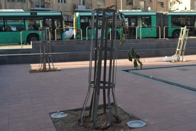 Jerusalem photo tree damage