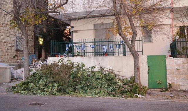 Jerusalem photo, tree fallen