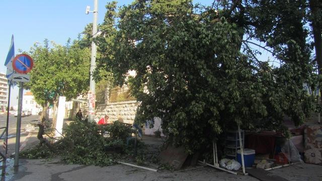 Jerusalem photo. tree dwon