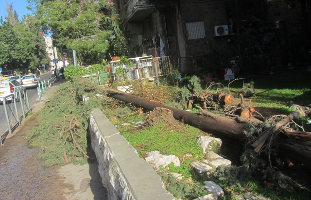 Jerusalem photo tree down