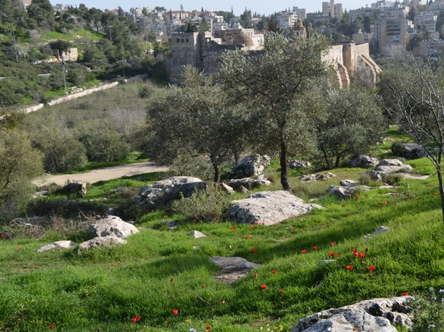 Valley of Cross photo, Jerusalem nature walk