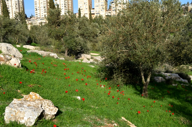 Valley of the Cross, Jerusalem photo