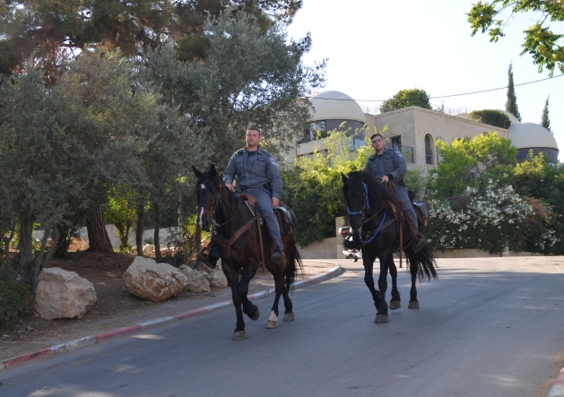 photo police horse