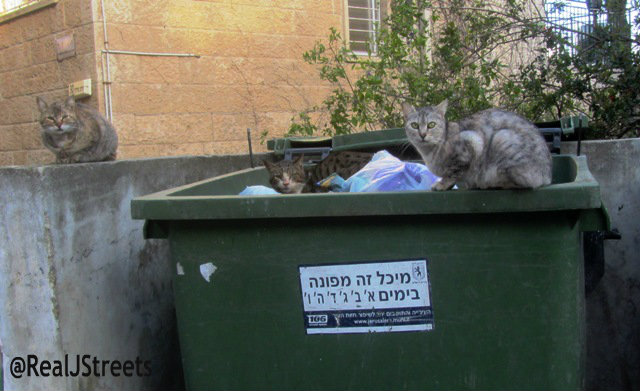 Cats in Jerusalem,