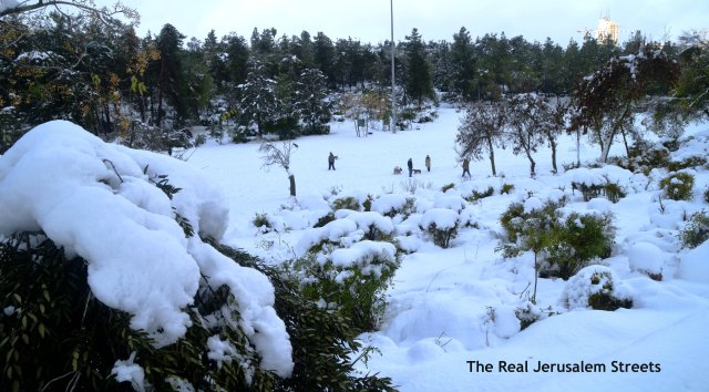 image snow jerusalem, picture jerusalem snow park, photo sacher park in snow
