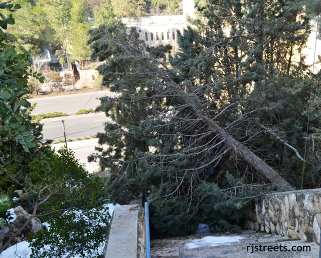 image large tree blocking steps, photo tree fallen on path, picture tree damage israel