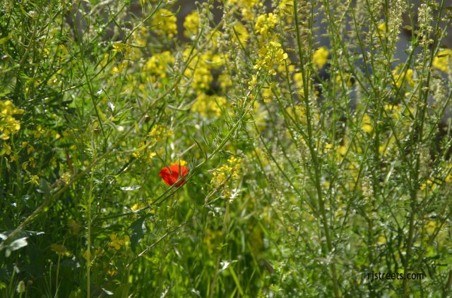 image red flower, photo yellow flowers, picture wild flowers