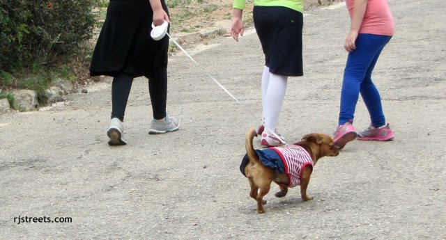 image animal independence day, photo independence day. picture dog dressed for independence day