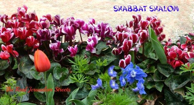 image flowers, shabat shalom sign