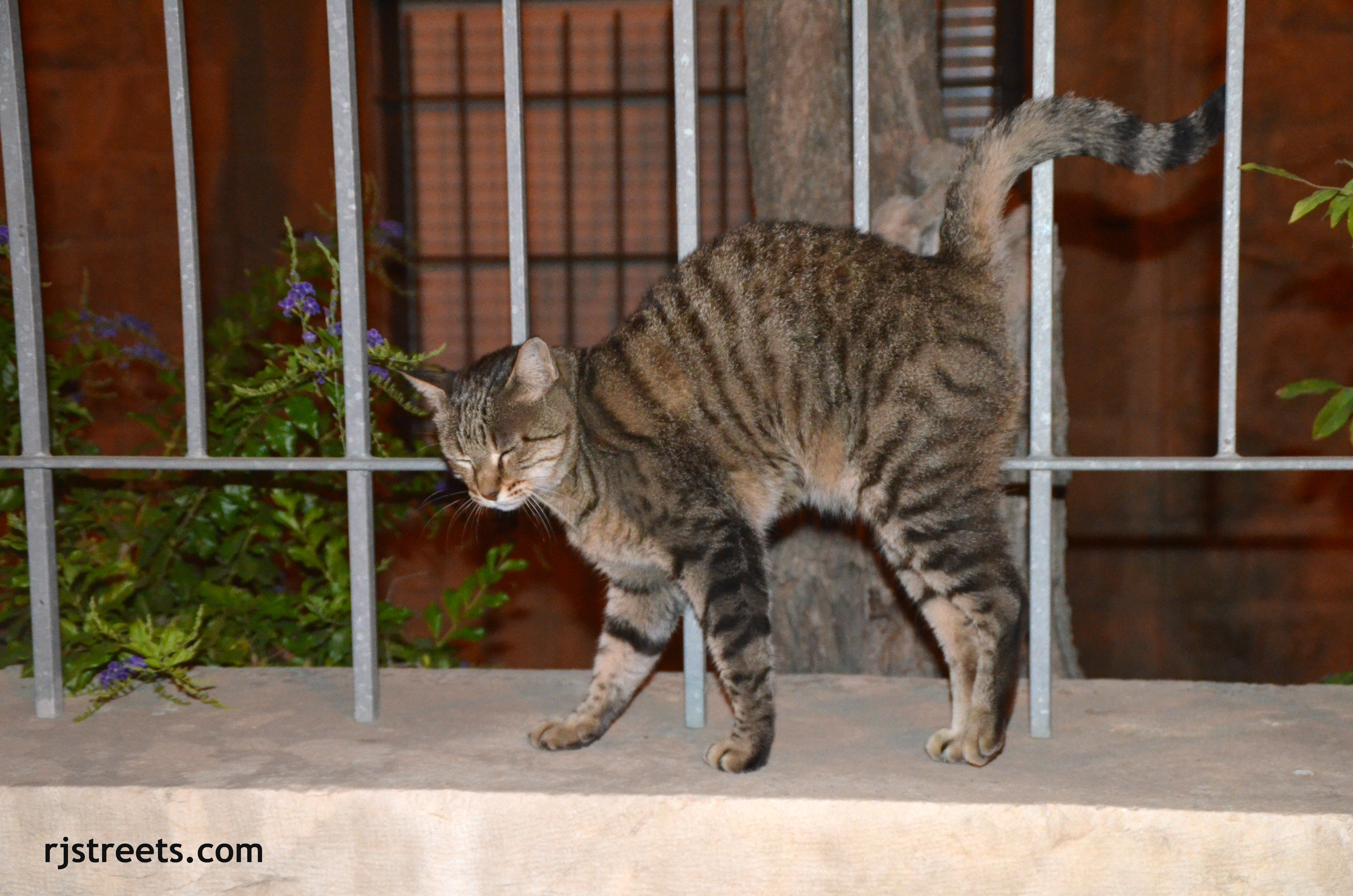image street cat