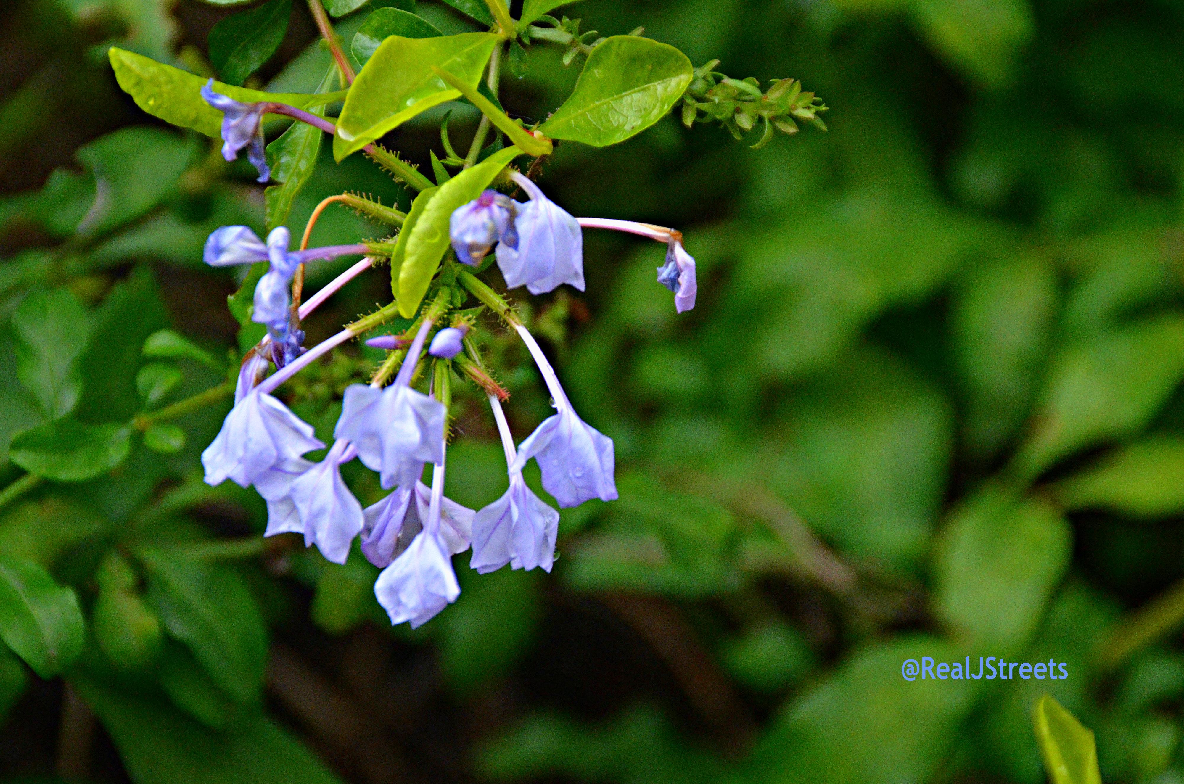 image wild flowers