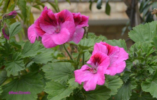 image purple flowers