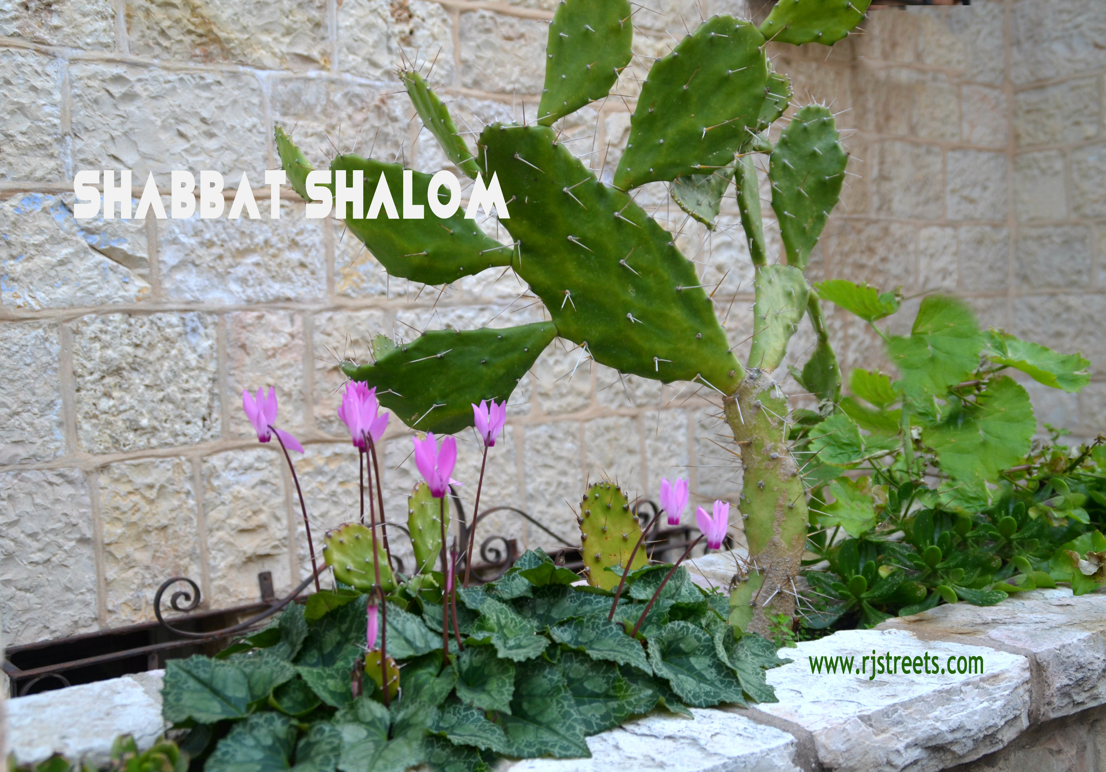 poster Shabbat Shalom