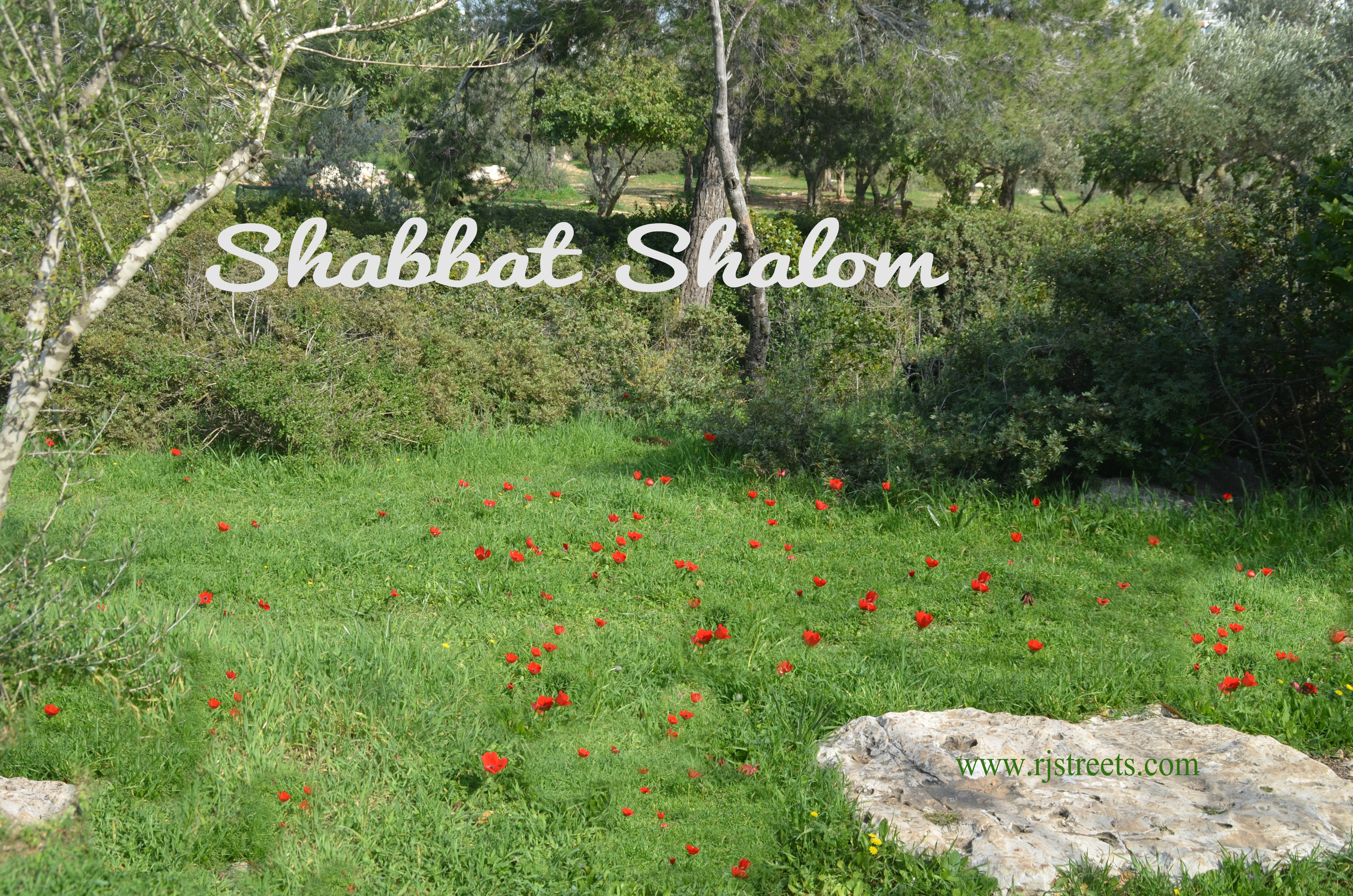 image Shabbos