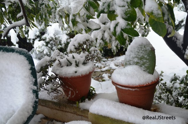 snow covered plants Jerusalem snow storm