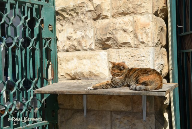 cat resting in sun Jerusalem Israel streets