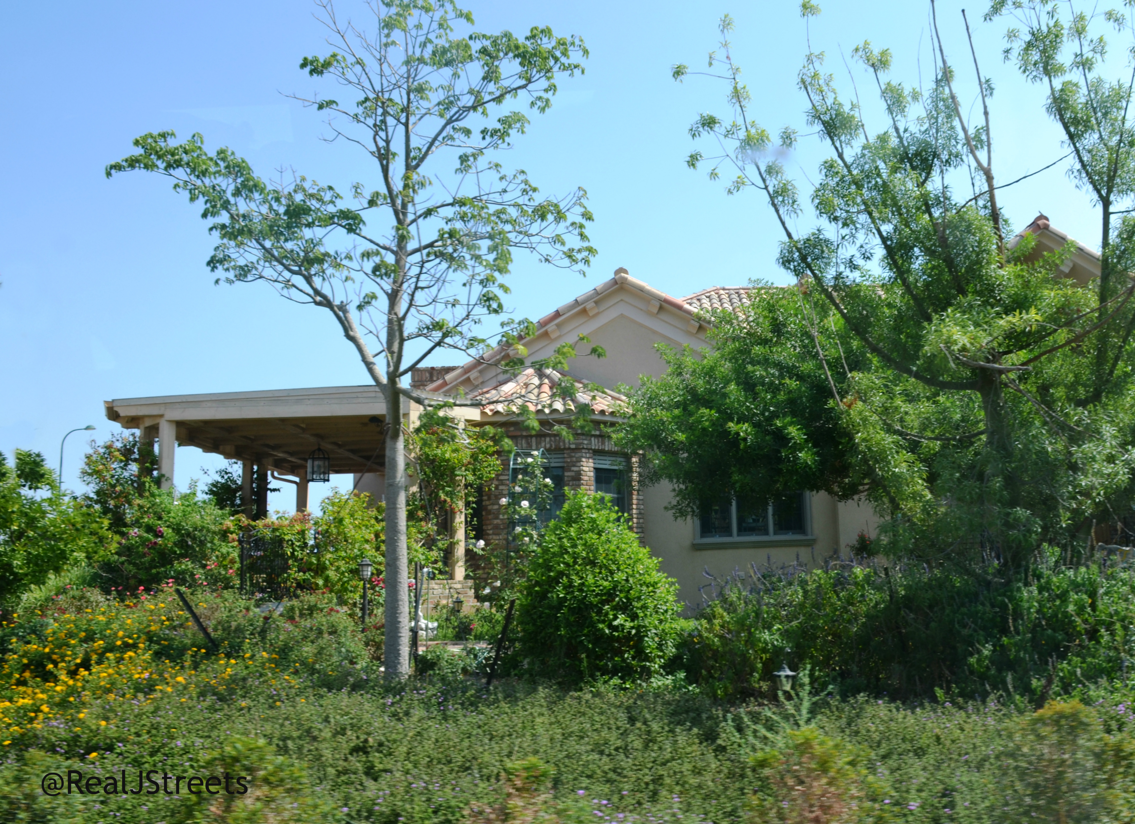 green around home from new Gush Katif home