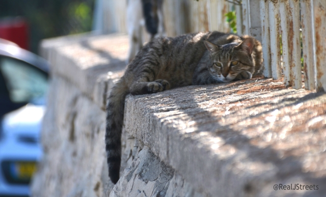 cat resting in heat, Jerusalem Israel