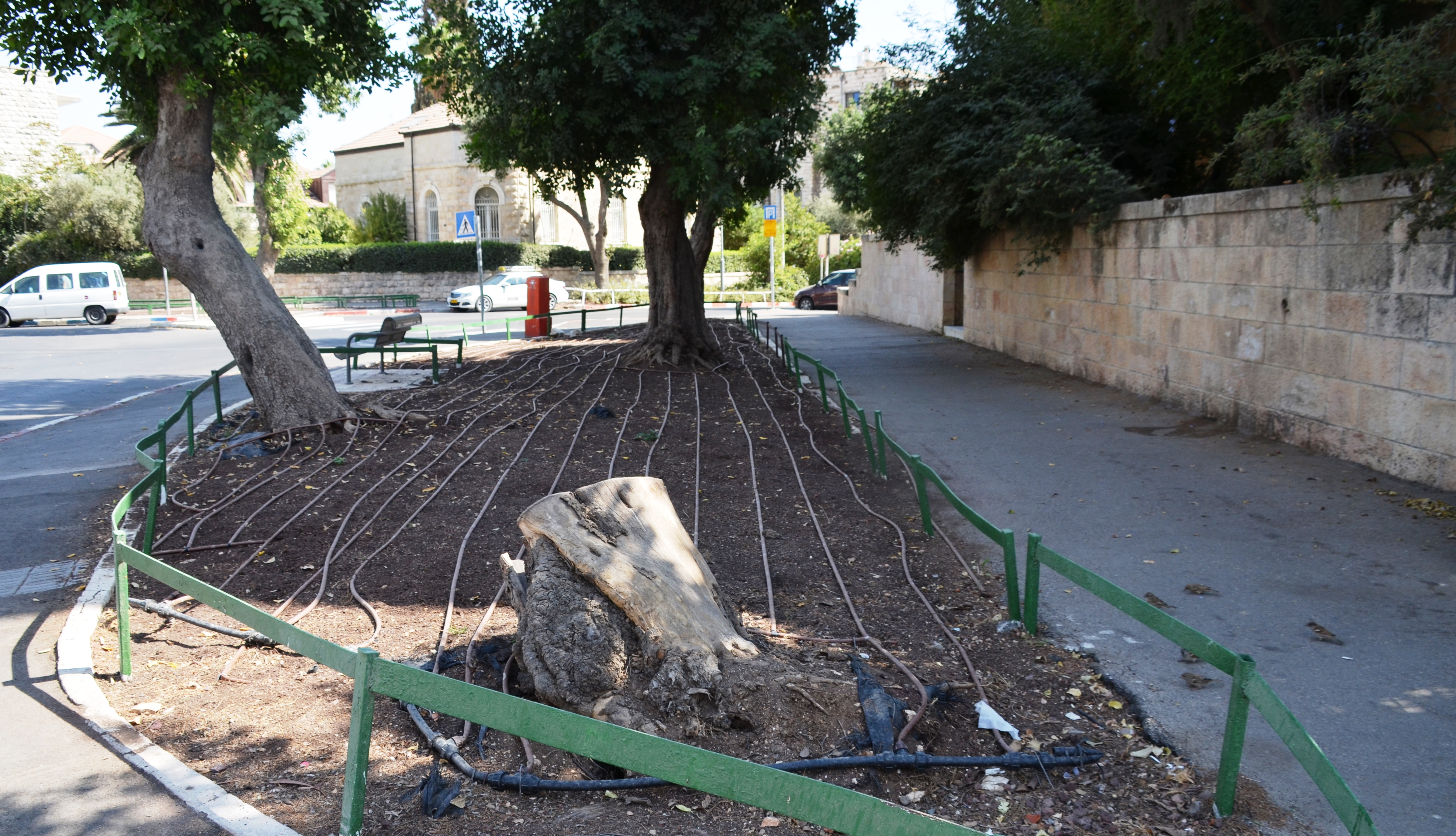 flower bed jerusalem Israel ready for planting