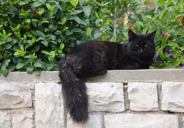 Jerusalem black cat