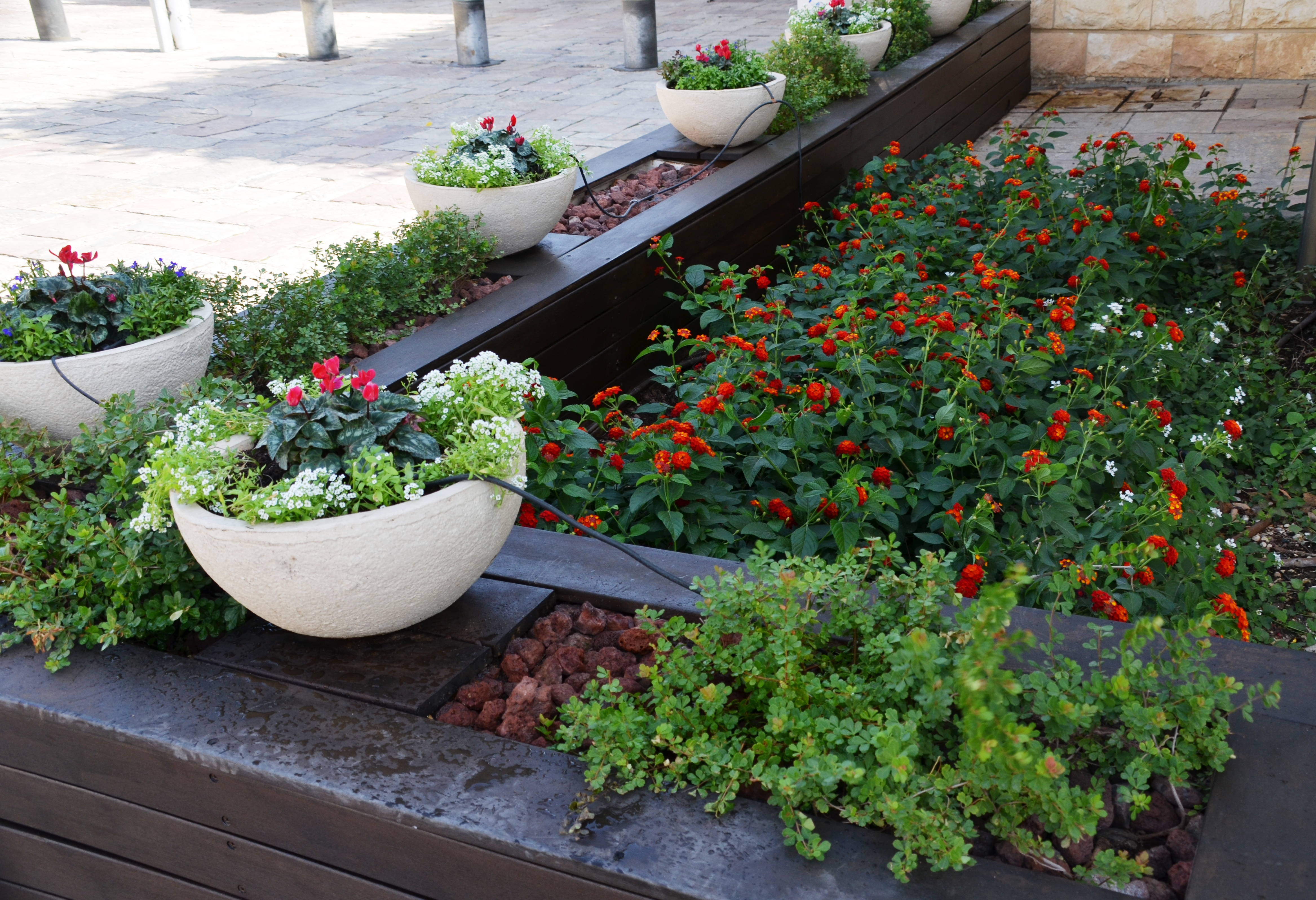 flowers planted at Beit Hanasi