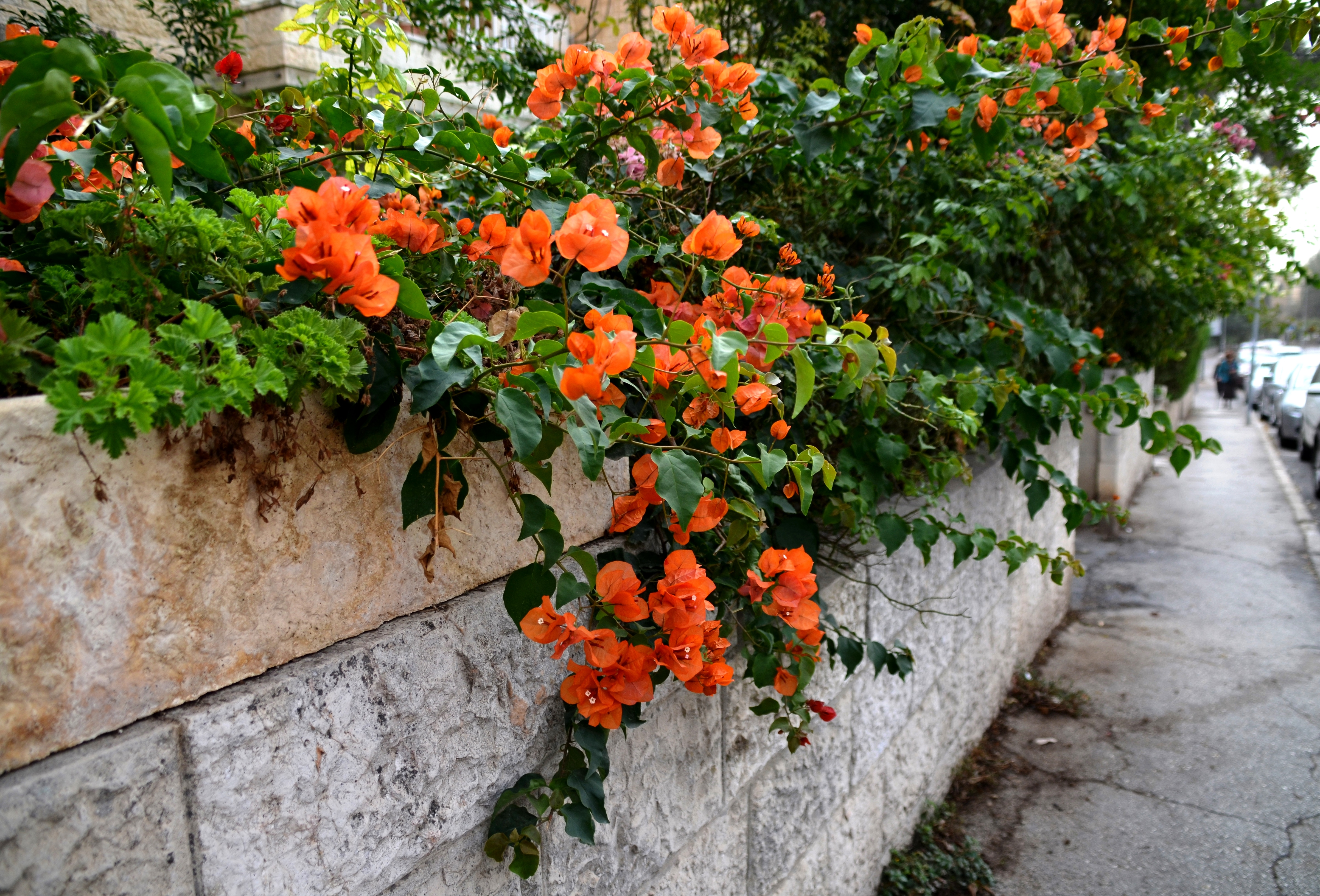 Israel fall flowers