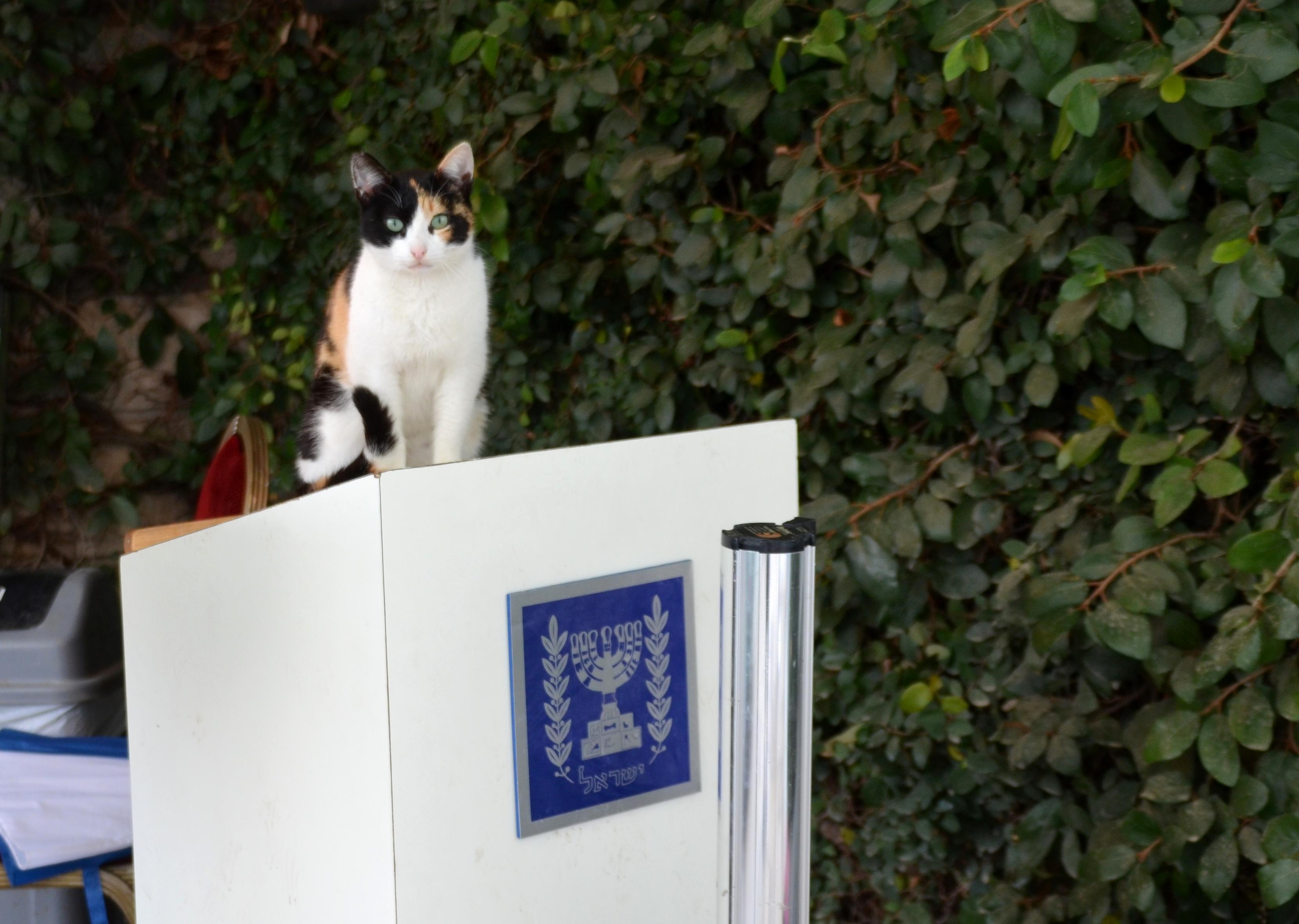 cat in Jerusalem