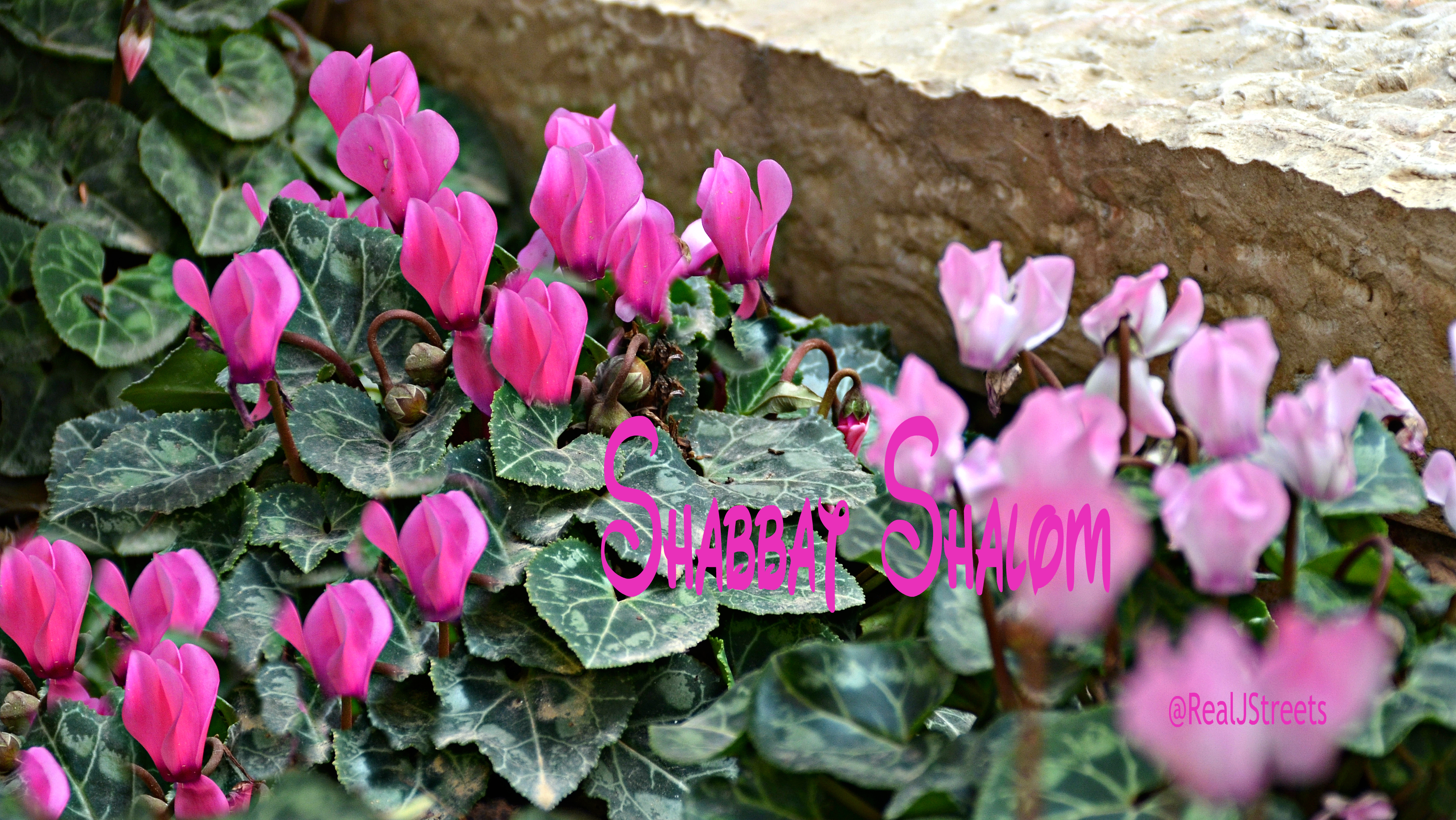 Shabbat shalom sign