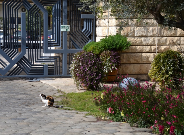 cat at Israeli presidents home