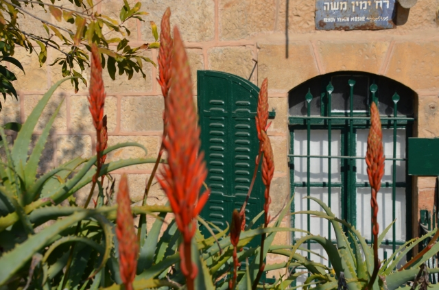 Aloe flowers in Yemin Moshe