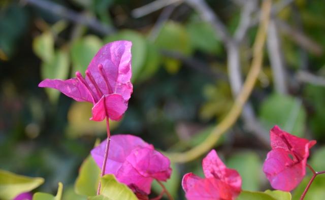 flowers Jerusalem Israel