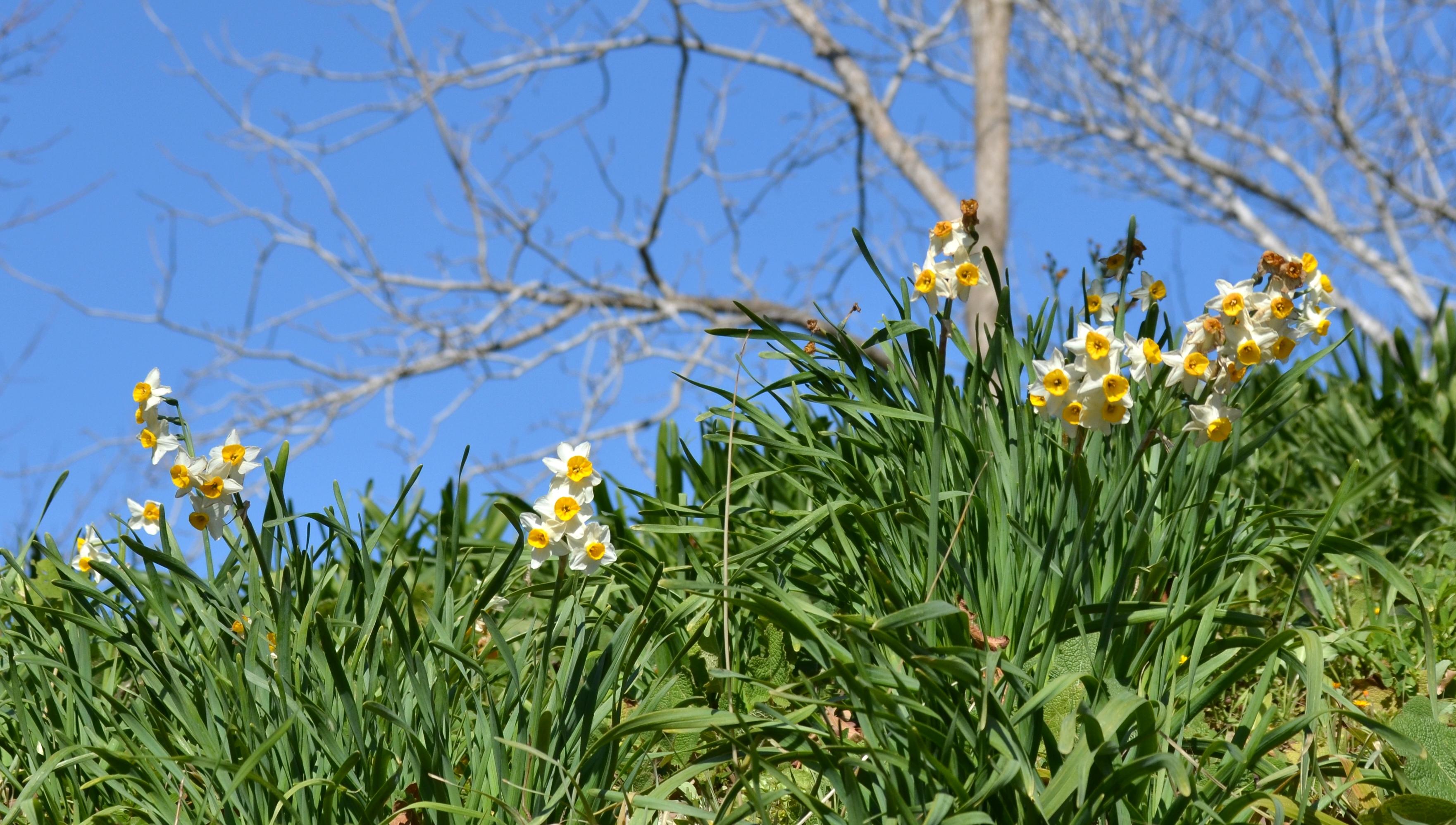 Jerusalem spring flowers