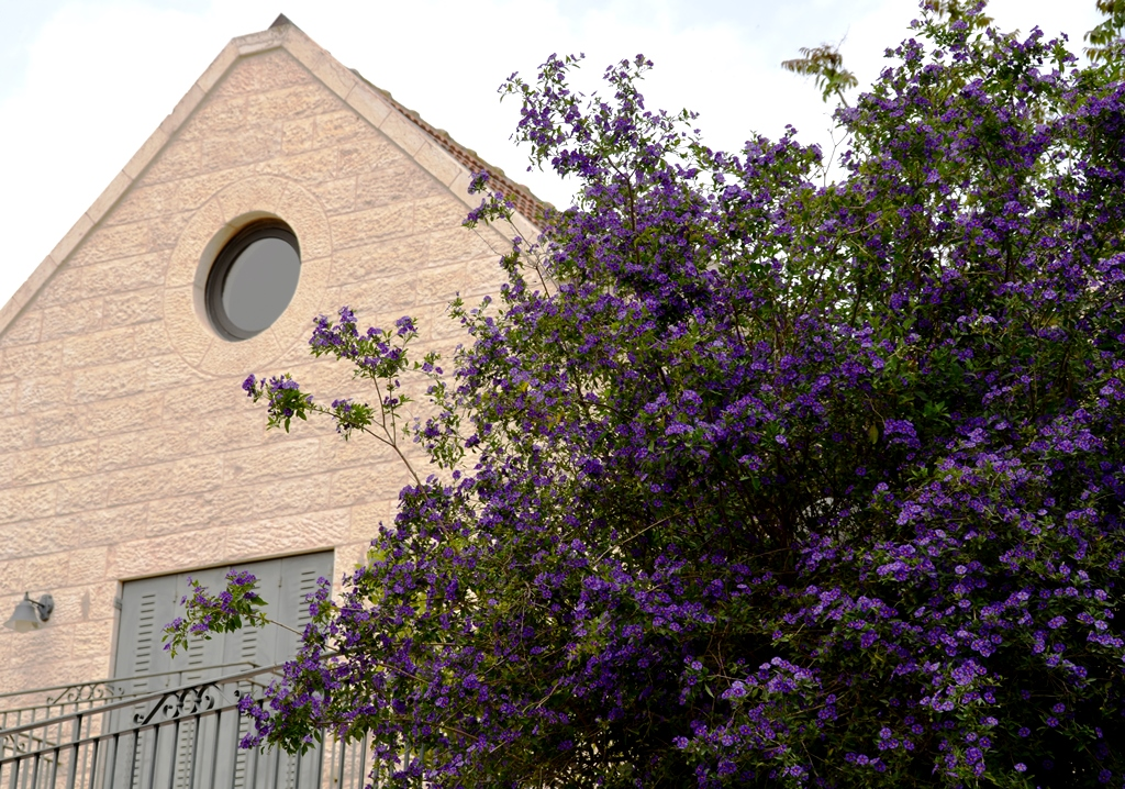 purple flowers Jerusalem Israel spring