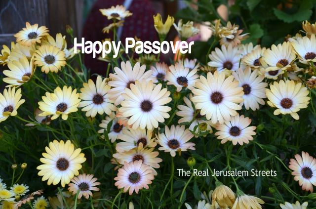 poster for Pesach, Passover sign