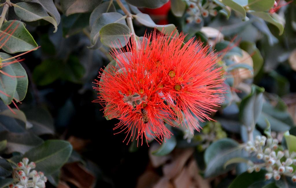 flower Jerusalem Israel spring
