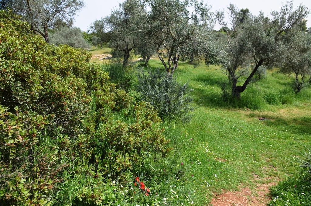Spring Jerusalem Israel Valley of Cross photo