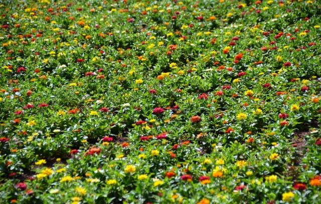 field of flowers, Jerusalem Israel