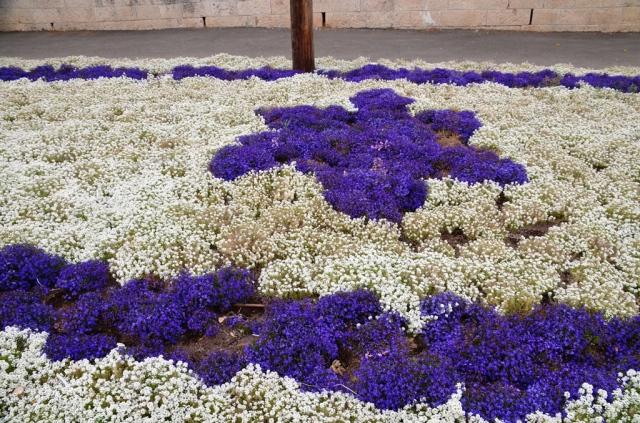 flowers in space of Israeli flag Marcus Street
