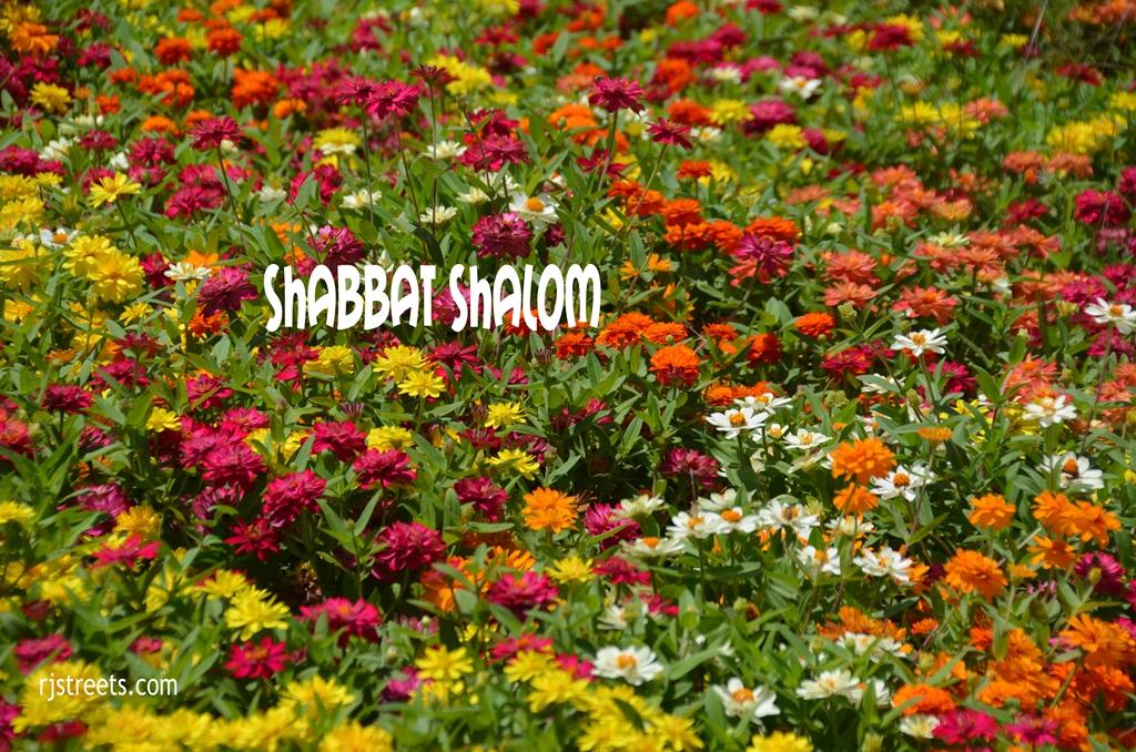 Shabbat shalom poster flowers